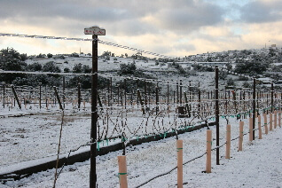 Ice Wine in Ramona?