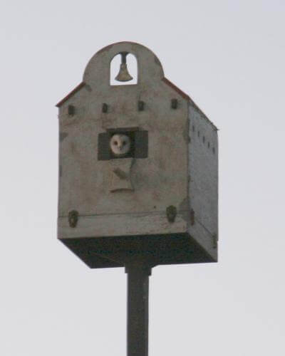 Our Owl Box